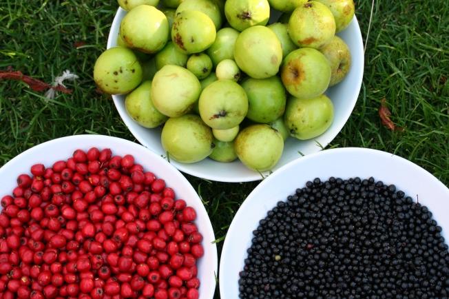 crab apples, haws & elderberries