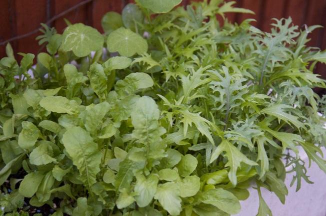 rocket and mixed salad leag